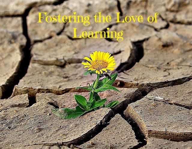 desert flower edited