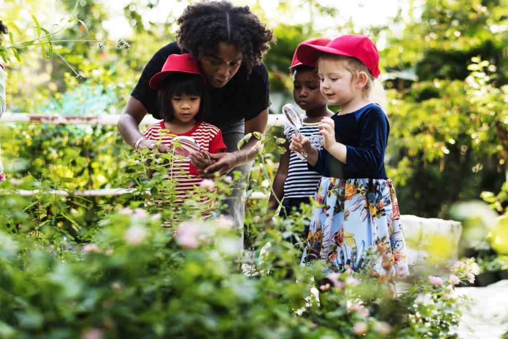 How to Start Nature Studies in Your Homeschool